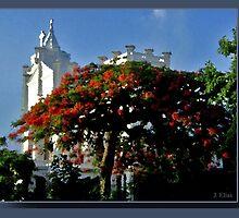 Key West by Jorge H. Elias