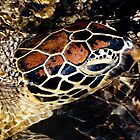 Turtle beauty  by Jessy Willemse