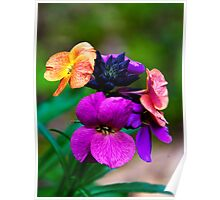 One flower three colours Poster