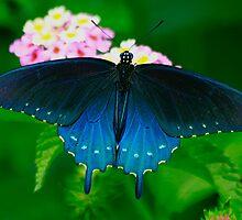 Wild Blue Yonder by Brenda Burnett