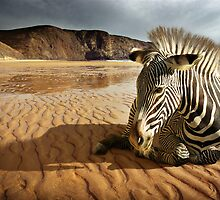 Land of Stripes by ccaetano
