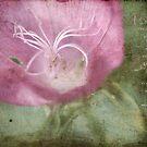 Purple Mallow by JulieLegg