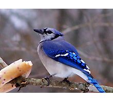 Bluebird Bagel Photographic Print