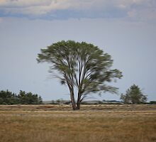 Lone Tree On the Prairie by Vickie Emms