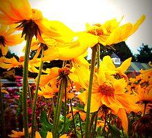 Sun Bathing - Arboretum, Kentucky by Tevis Potts