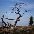 Burmis Tree Ancient Limber Pine by Vickie Emms
