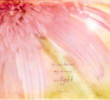 Pink Coneflower by JulieLegg