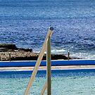 Dee Why Saltwater Pool by Janie. D