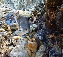 Cats on Rocks Two  by Vicktorya Stone