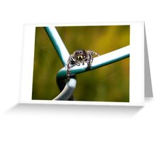 Curious little jumping spider. Greeting Card