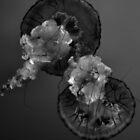 Thunderstorm Jellies by InvictusPhotog