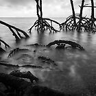 Mangrove by Michael Howard