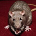 Rat by Lizzylocket