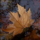 Winter Leaves by sedge808