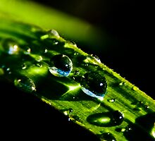 Droplets by Keith Irving