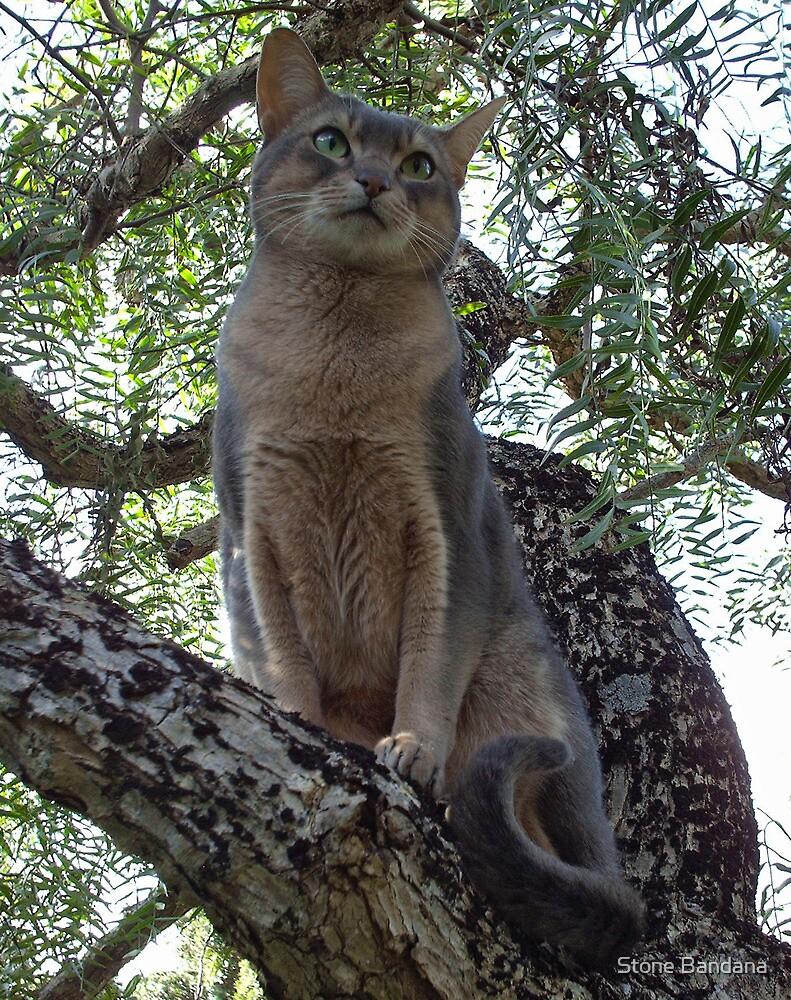 Zaki Cat in the Pepper Tree  by V Stone