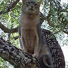 Zaki Cat in the Pepper Tree  by Vicktorya Stone