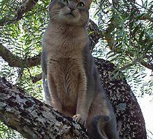 Zaki Cat in the Pepper Tree  by Vicktorya Stone