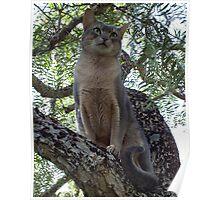 Zaki Cat in the Pepper Tree  Poster