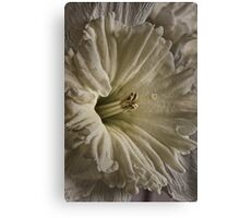 June's Daffodil Canvas Print