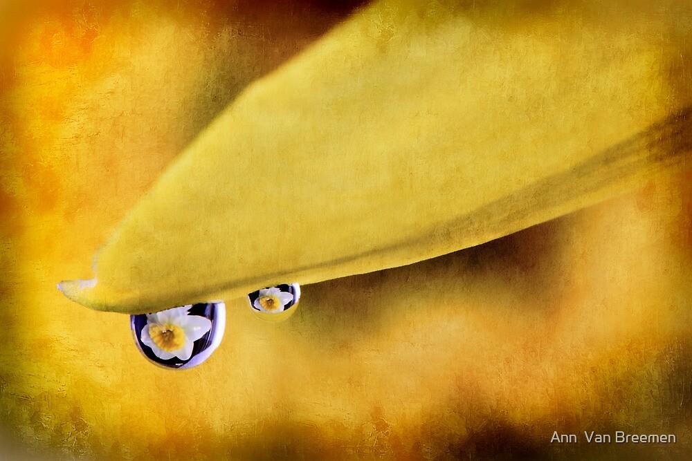 Happy Daffodil Day by Ann  Van Breemen