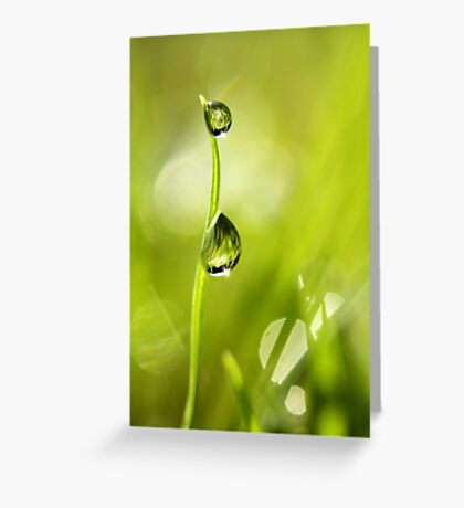 Drops of Late Summer Greeting Card