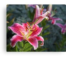 From the yard Canvas Print