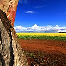 Colours Of Australia by Stephen Ruane