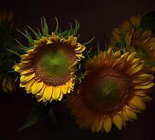 Sunflowers by EbyArts