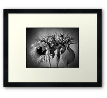 Decay and rebirth Framed Print