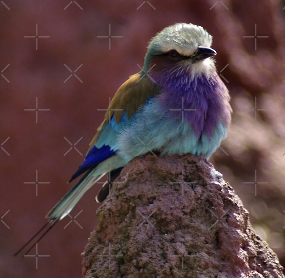 Pretty little bird by Yampimon