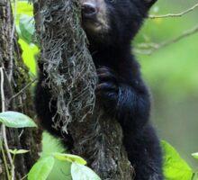 Black Bear Cub Sticker