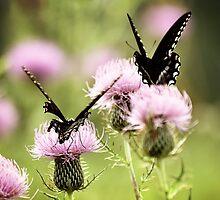 Swallowtails by JudiLyn