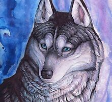 Husky Portrait by Everlyn