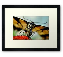 Comin' Straight On For You Framed Print