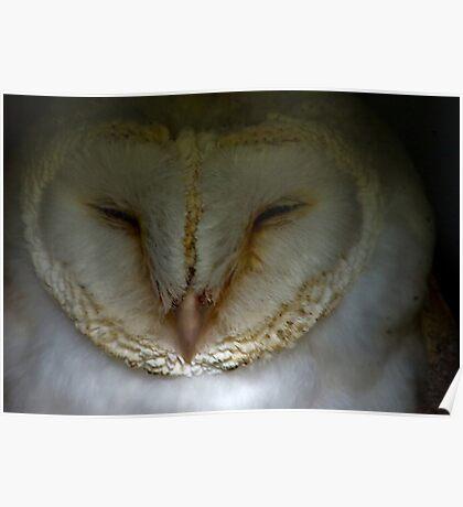 Barn Owl #1 Poster