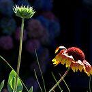 Le Conquet - Atlantic flower. by Jean-Luc Rollier