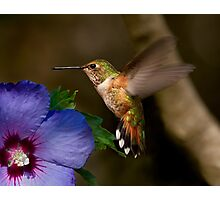 FAST WINGS Photographic Print