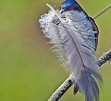 FEATHER YOUR NEST by Dennis  Small
