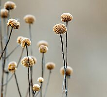 GONE TO SEED by Dennis  Small