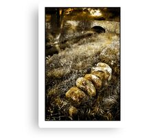 Nestled by the Brook Canvas Print
