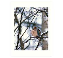 Morning Dove in Winter Art Print