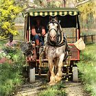 Take Me Home Country Road by Trudi's Images
