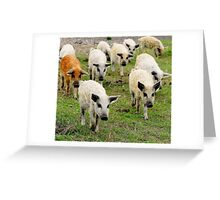 Ten little pigs went to market Greeting Card