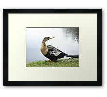 Plantation Bird Framed Print