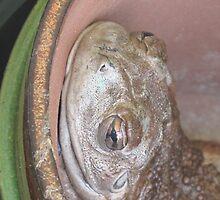 Frogzilla 1 by Natiplop