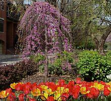 Philadelphia Dresses For Spring by MotherNature2
