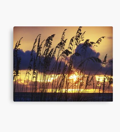 A perfect 10 Canvas Print