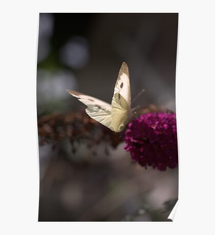 Butterfly Buddy Poster