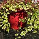 Perfect ivy by Jan Carlton